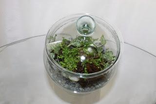 terrario-que-a-minhoca-cortou-folhas-da-planta