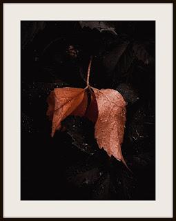 plakat, plakat z liściem, plakat z liściem w kroplach, plakat darkmood, plakat z liśćmi, plakat w kroplach deszczu, plakat roślinny, plakat A3, plakat pionowy, plakat z winobluszczem, plakat z dzikiem winem