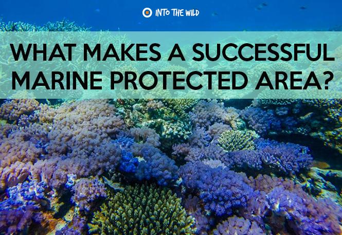 Cape Coral web stranice za upoznavanje potpuno besplatno upoznavanje s Australijom
