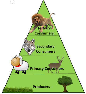 Food Chain, educationphile.com, ncert class 7th chapter 1, nutrition in plants
