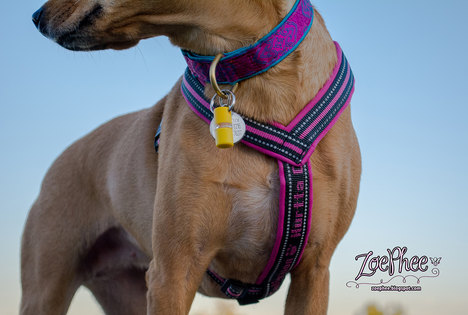 ZoePhee: To The Woman Who s Dog Harnesses