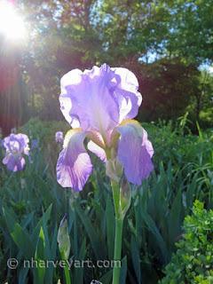 Iris photo with sunbeams