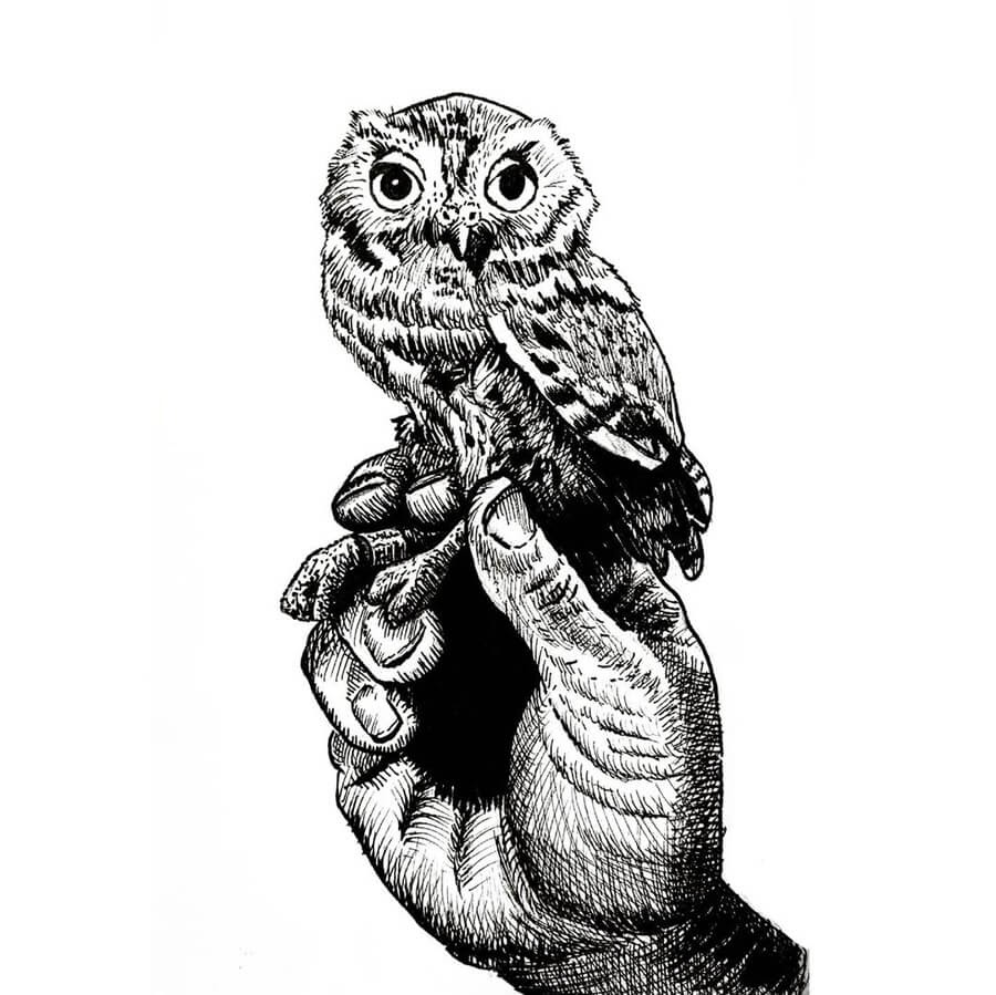 01-Little-Elf-Owl-Tim-Rees-www-designstack-co