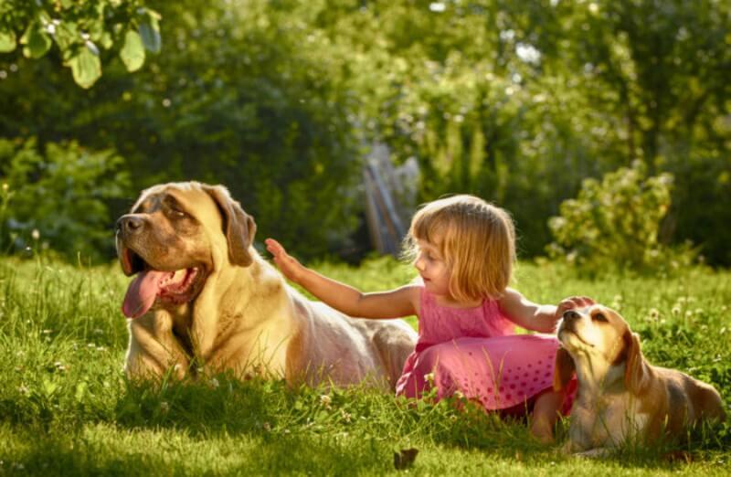 Δεν υπάρχουν επικίνδυνο σκυλιά, υπάρχουν επικίνδυνοι άνθρωποι...!!!