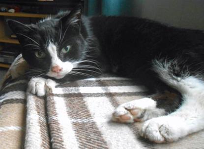 black-and-white cat sitting on beige blanket