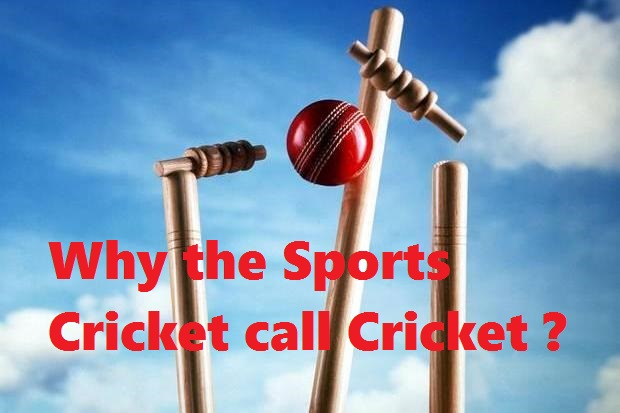 Why the game cricket call cricket