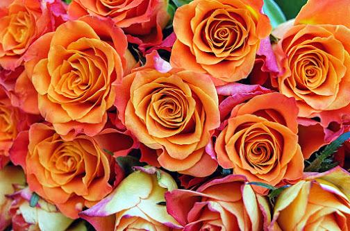 أحلى الورود ورق حائط 19