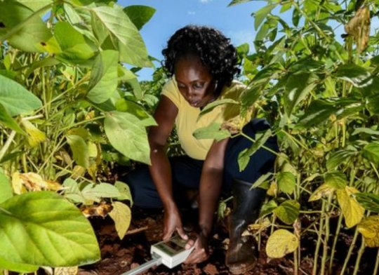 Projets, agriculture, entrepreneuriat, alimentation, faim, malnutrition, énergie, PSE, LEUKSENEGAL, Dakar, Sénégal, Afrique