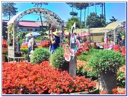 Wisata taman bunga begonia Lembang