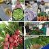 Feira de orgánico é um sucesso em Limoeiro