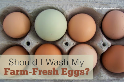 wash eggs or not to wash