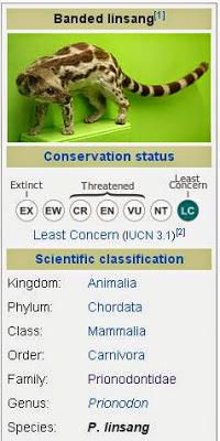 Perbedaan Antara Linsang dan Berang-berang (Otter) mudal kemaningen