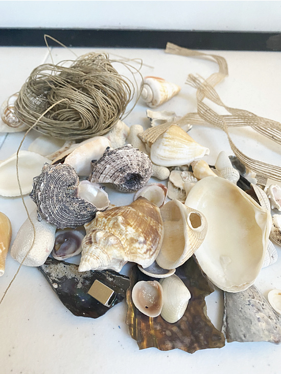 shells and coral