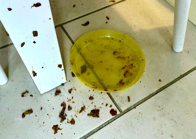 The floor with a yellow plastic plate and splatters of a mince sauce on the floor and table leg