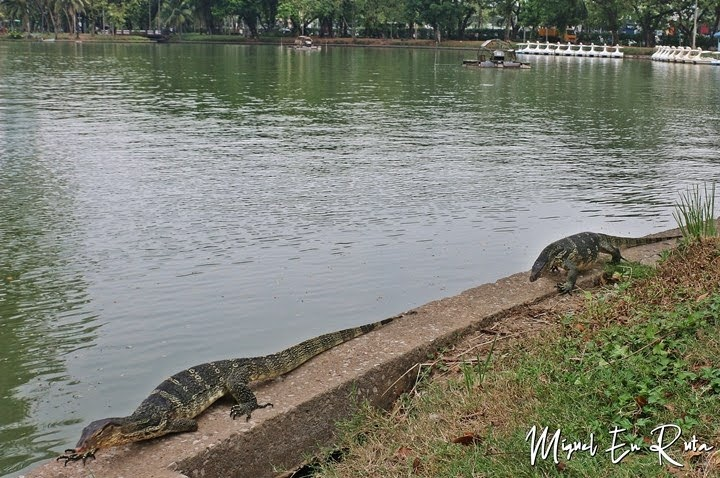 Varanos en el Parque Lumpini, Bangkok