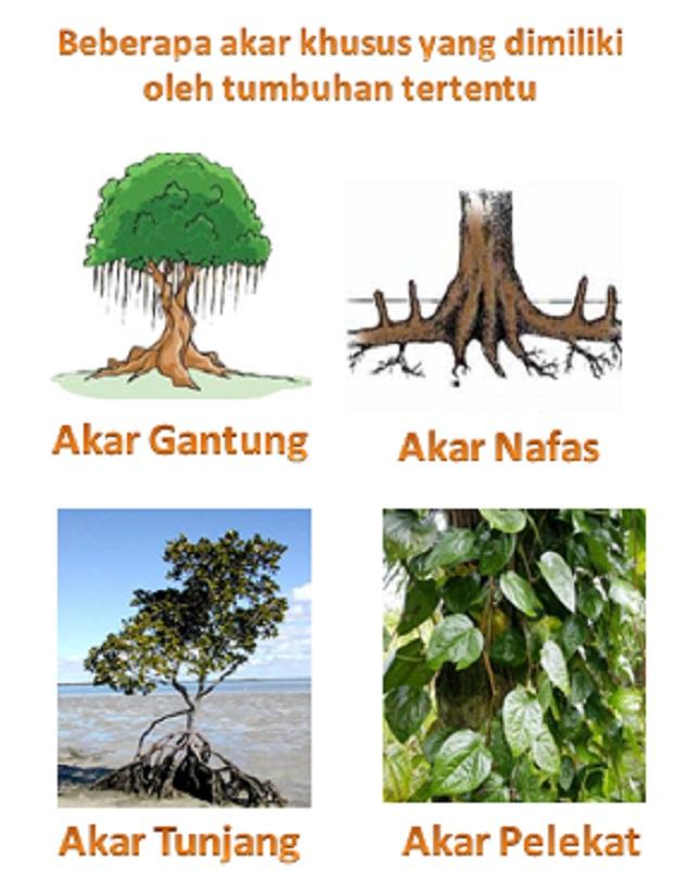 Jenis Jenis Akar : jenis, Bagian, Tumbuhan, Beserta, Fungsinya,, Parts, Plants., Pustakapengetahuan.com