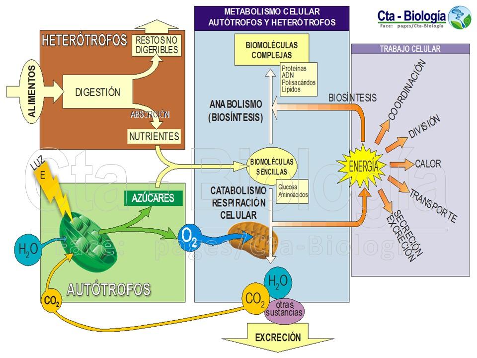 Seductor Booster de metabolismo