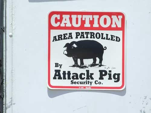 Afbeeldingsresultaat voor guard pigs