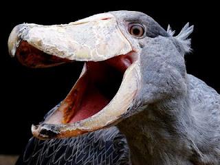 dinosaurio vivo