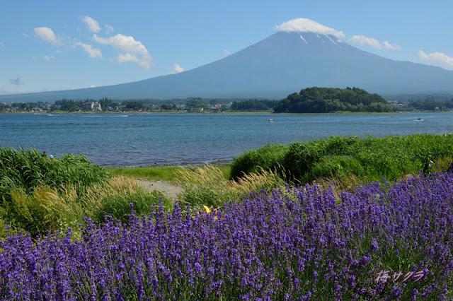 Herb Festival at Lake Kawaguchiko, Yamanashi Pref.