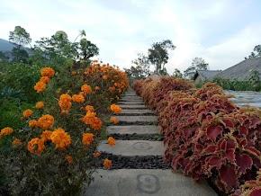 Pesona Taman Bunga Tretes Taman Tani di Selo Boyolali