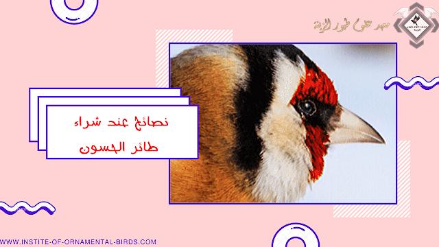 8 نصائح عند شراء طائر الحسون