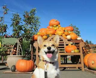 かぼちゃの馬車、シェアハウス