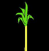 sugarcane meaning in hindi