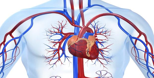 Penyakit/Gangguan pada Organ Peredaran Derah