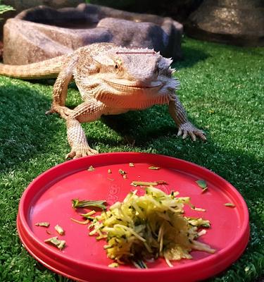 bearded dragon food