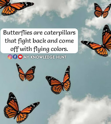 Quotes about butterfly, Best Inspirational Quotes and Sayings About Butterflies