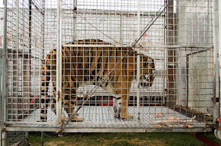 animali circo violenza diseducativo