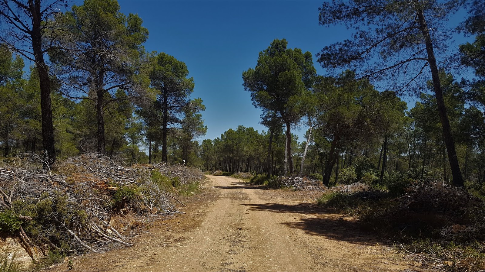 Forest track from Casas de Benalí to Navarrés, Valencia, Spain