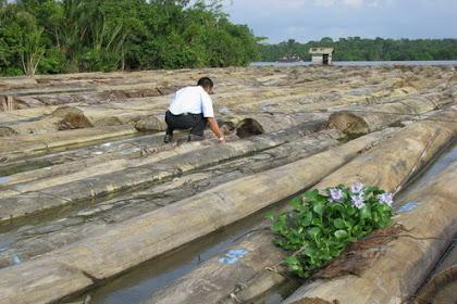 Pengalaman Bekerja Sebagai Montir di Perusahaan Hak Pengusahaan Hutan/ HPH