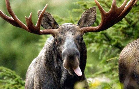 Biebrzański Park Narodowy zwierzęta i rośliny