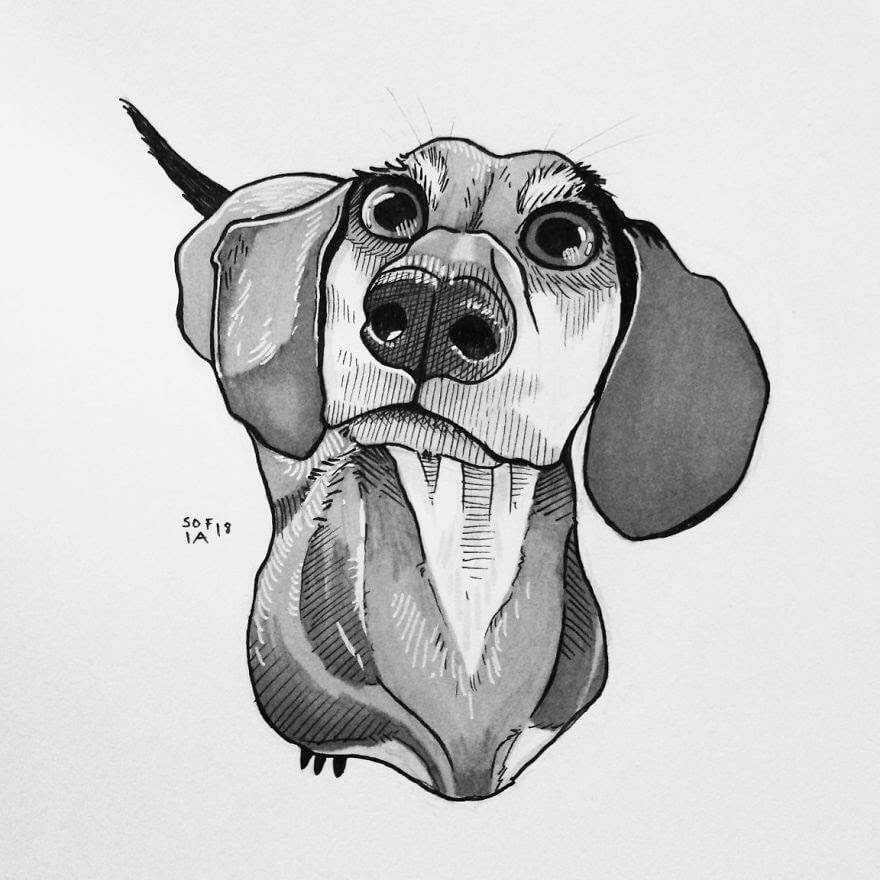 03-Dachshund-Sofia-Härö-Black-and-White-Ink-Animal-Drawings-www-designstack-co