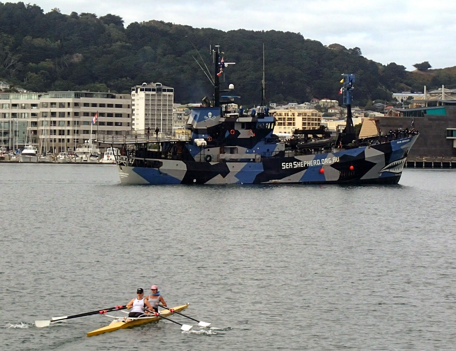 Sea Shepherd in Wellington Harbour