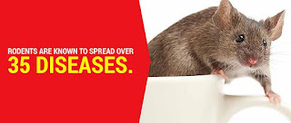 Diseases Caused by Rats and Mice in Humans