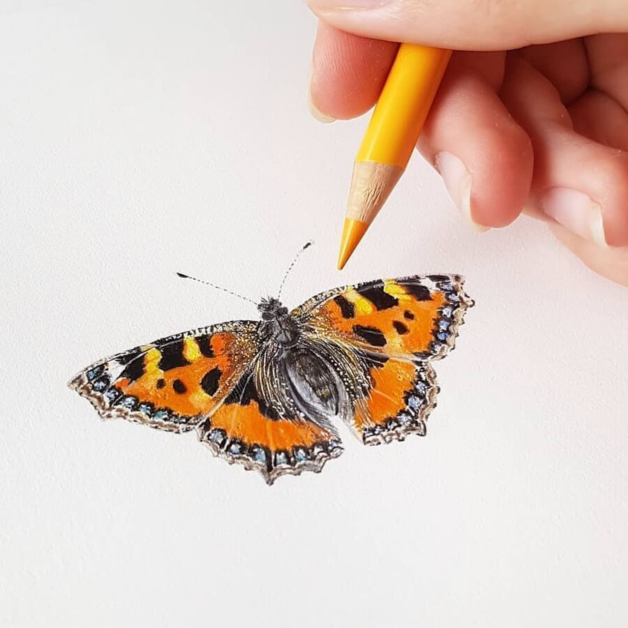 10-Butterfly-Paula-www-designstack-co