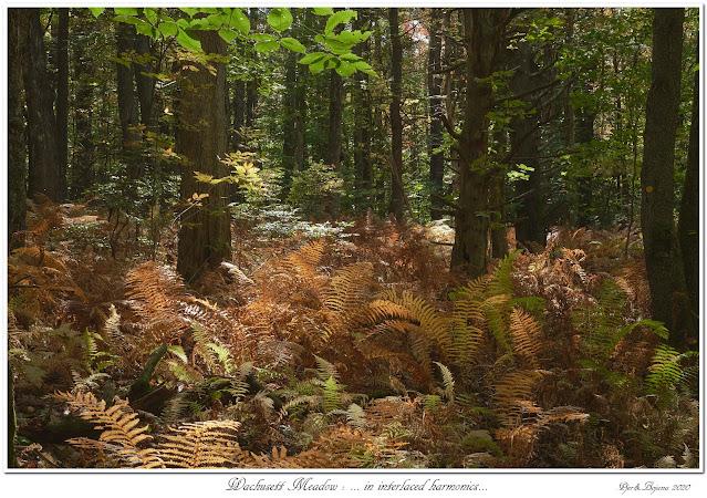 Wachusett Meadow: ... in interlaced harmonics...