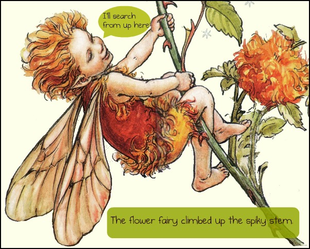 The Book Chook Lets Celebrate Fairy Tale Day