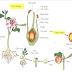 Một số câu hỏi về sinh sản hữu tính ở thực vật có đáp án (Phần 1)