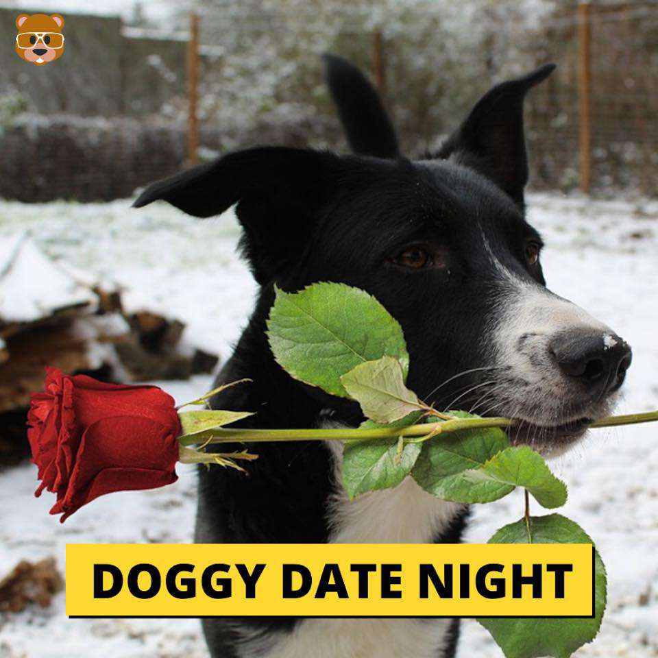 Doggy Date Night Wishes