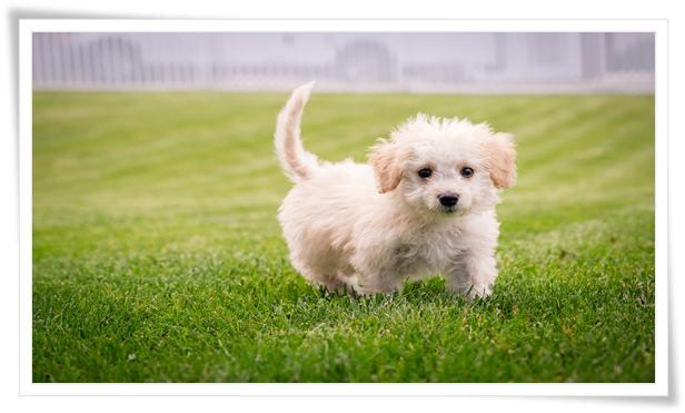 small dog training near me