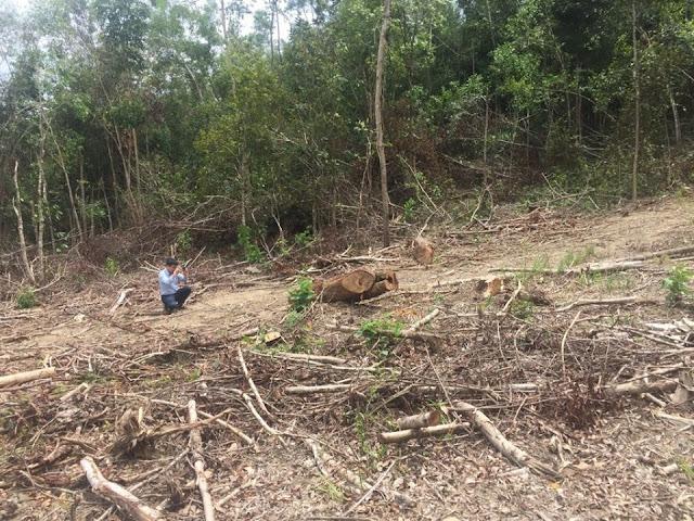 Phá rừng: bất lực hay lòng tham?