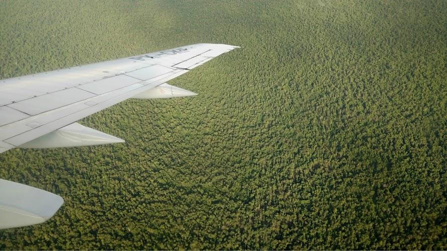 Hutan — Foto dari pesawat, Jakarta-Pontianak 26 April 2019