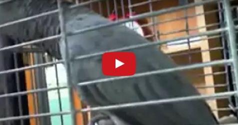 VIDEO: Burung Ini Mampu Ucapkan Dzikir Dan Basmalah Dengan Sangat Fasih
