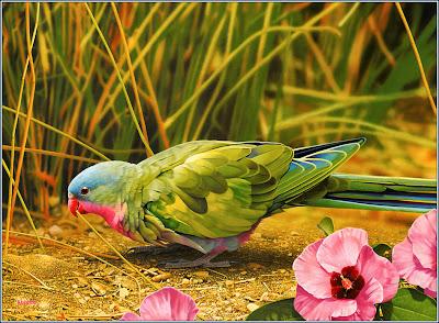 beautiful-HD Birds wallpaper
