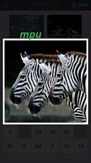 стоят три одинаковые зебры рядом друг с другом