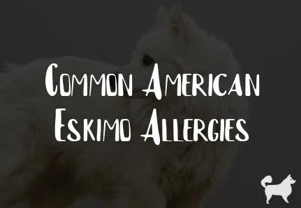 Common American Eskimo Allergies